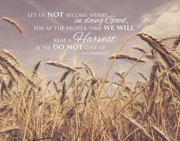 Let us not become weary in doing good - Galatians 6:9
